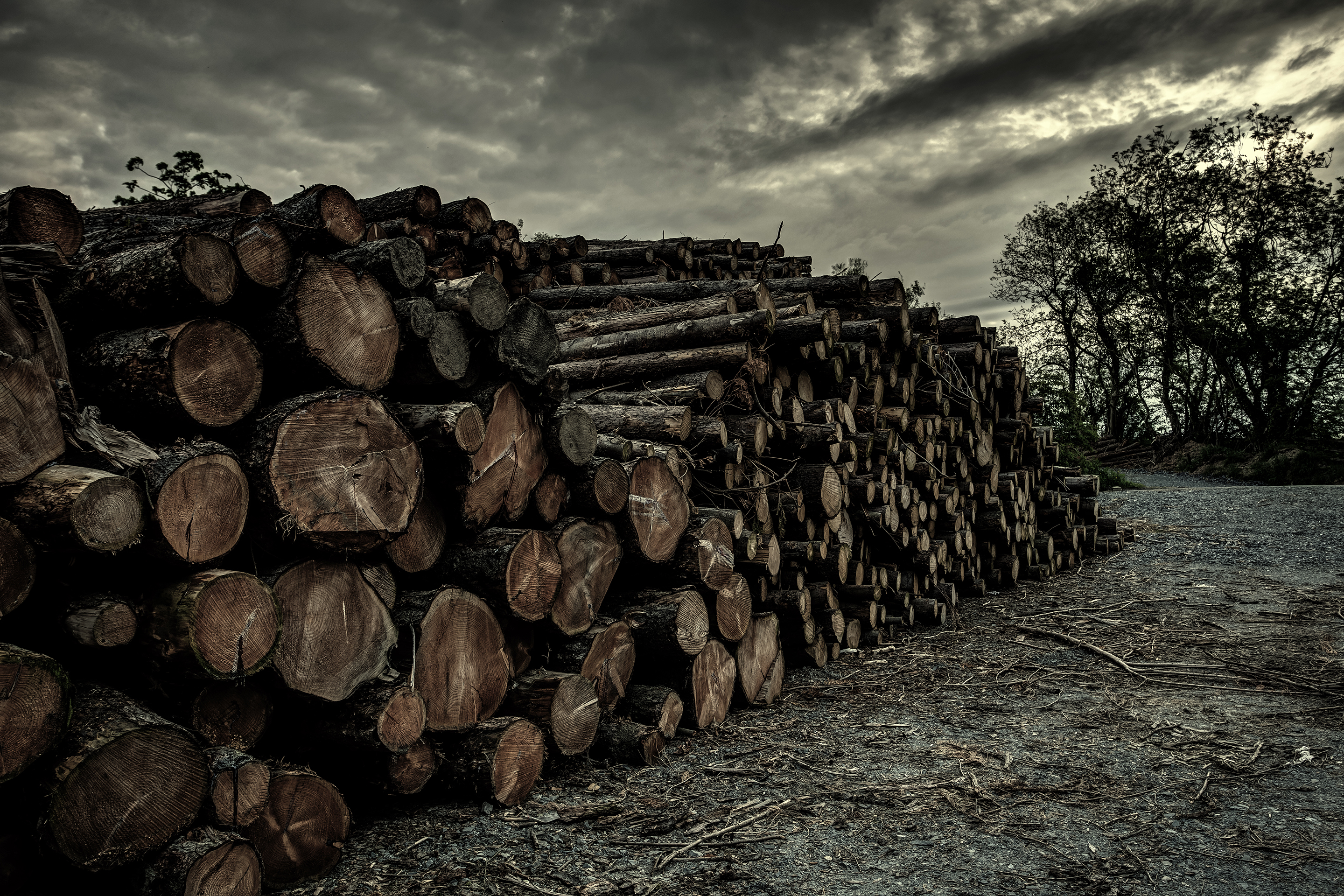 Forests Cut to the Ground